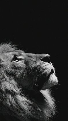 16 New Ideas Photography Wallpaper Phone Beautiful Lion Wallpaper Iphone, Cat Wallpaper, Animal Wallpaper, Iphone Backgrounds, Mobile Wallpaper, Black And White Lion, Animals Black And White, Black Cats, Lion Images