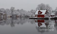 Winter Beautiful Winter 1st place - The Morning After by Stacey Brooks - Fine Art America