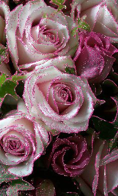 Rosas Hermosas Discover 1 million Stunning Free Images to Use Anywhere Beautiful Flower Drawings, Beautiful Love Pictures, Beautiful Rose Flowers, Flowers Gif, Beautiful Flowers Wallpapers, Glitter Flowers, Beautiful Nature Wallpaper, Beautiful Flower Arrangements, Beautiful Gif