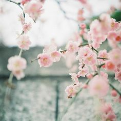 Looks like the flowering almond we have in our yard by the arbour.