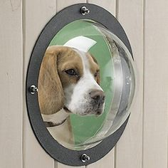 Fence Window for the Dogs in Your Life