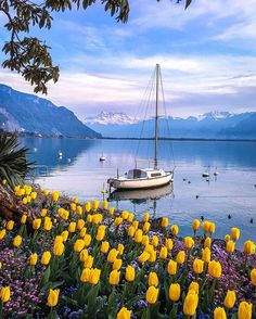 Right now Montreux - Switzerland  w/ @Doounias  & @Switzerland.Vacations ✨Good Evening✨