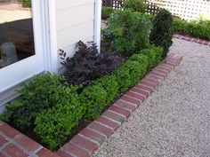 Boxwood/Brick/Gravel edge