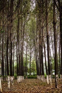 Mein Fotoblog: Der Herbst kommt