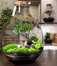 Just a Touch of Pixie Dust JUST A TOUCH OF PIXIE DUST : PHOTO / CONTENTS  FROM  IN.PINTEREST.COM #BLOG #EDUCRATSWEB