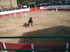 Course de taureau a Aureilles