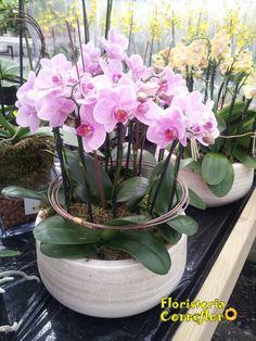 FLORISTERÍA CORREFLOR. 916956271 Centro de Orquídeas. Puedes elegir el color y la cantidad de orquídeas. Perfectas para cualquier acontecimiento y muy duraderas. Cada flor se mantiene 3 meses en perfecto estado.