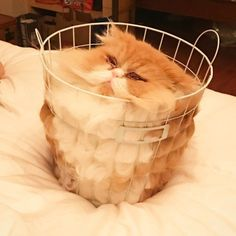 Cats And Their Silly Shenanigans Glorious Cat Pics) - World's largest collection of cat memes and other animals Cute Cat Gif, Cute Funny Animals, Funny Cats, Humorous Animals, Funny Horses, Funny Humor, Funny Cat Photos, Funny Animal Pictures, Random Pictures