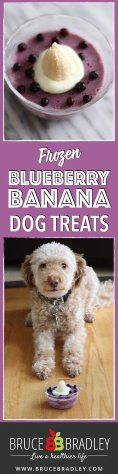 blueberry banana frozen dog treat