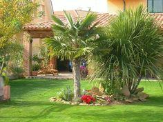 Jardín con pequeña isla con palmeras