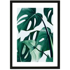 "Monde Mosaic Monstera Framed Print - 20x28"" (€120) ❤ liked on Polyvore featuring home, home decor, wall art, green, forest wall art, handmade home decor, european home decor, handmade wall art and home wall decor"