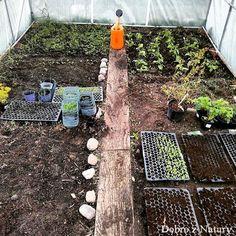 Pallets Garden, Small Garden Design, Balcony Garden, Stepping Stones, City Photo, Vegetables, Outdoor Decor, Gardening, Vegetable Gardening