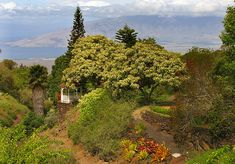Created in 1968 as a native Hawaiian plant reserve by Warren McCord, Kula Botanical Garden is Maui's first public garden, and is positively enchanting, to say the least. Maui Hawaii, Hawaii Travel, Hawaiian Plants, Hawaii Activities, Crop Protection, Go Usa, Seed Bank, Public Garden, Closer To Nature