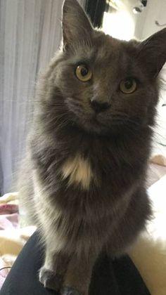LOST CAT: 02/01/2018 - North Decatur, Georgia, GA, United States. Ref#: L40278 - #CritterAlert #LostPet #LostCat #MissingCat