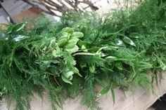 Plumosus with Italian Ruscus, Green Ivy, & Variegated Pittosporum