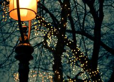 kvknowsherfun:ral-across-the-universe:Winter LightsI need more twinkle lights in my life