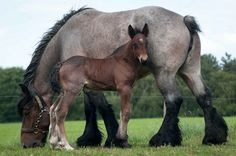 Mare & foal by Ton van der Weerden