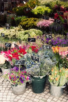 A walk through a Paris flower stall in April