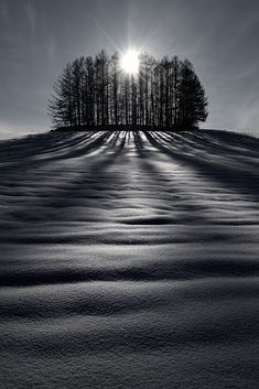 Kent Shiraishi. The wonderful scenery of Hokkaido during winter is made by hills, trees, snow, the sun and shadows. Moreover, you can see footprints, such as the north fox, a deer, and a rabbit.