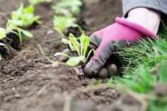 A new community garden planned for Landrum will provide a place for students to grow food that can be served at school or sold at market. Spartanburg