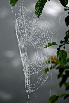 **spider web three by sandy from gardenpath/ flickr.com