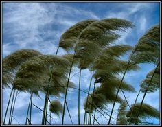 wind | Blowing in the Wind