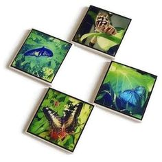 Butterfly Tile Magnets