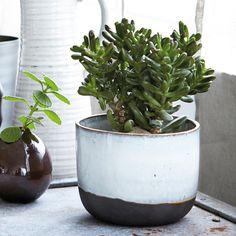 ceramic-planter