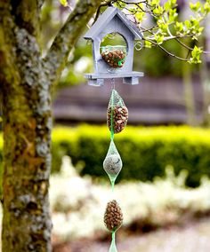 Decorativa Mangiatoia Per Uccellini + Mangime