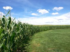 Is this Heaven? .... No its Iowa.