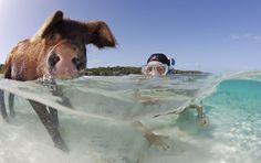 Everything You Wanted to Know About Swimming with Pigs in the Bahamas