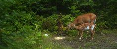 gordonspark.com Manitoulin Island, Gordon Parks, Kangaroo, Giraffe, Wildlife, Animals, Baby Bjorn, Felt Giraffe, Animales