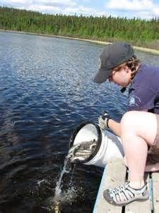 1000 Images About Fish Stocking By Florida Pond Management On Pinterest Stockings Fish And