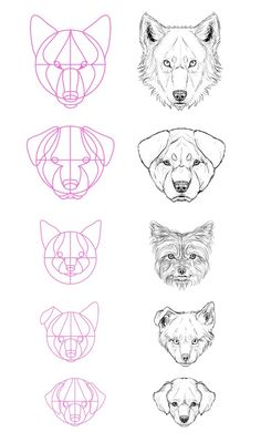 Step 13 But what about all the breeds? Most of them aren't really similar to a wolf. Well, that's not a problem - just modify the size of the elements of the head, adjust the space between eyes and so on. When looking at a reference, locate the big circle, its central lines and check all the proportions. Most likely it'll stay in your mind after your first try!