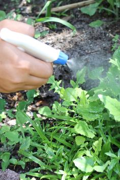 3-Ingredient Natural Weed Killer That Really Works How To Make Your Own Recipe, Indoor Garden, Indoor Plants, Home And Garden, Outdoor Gardens, Natural Garden, Natural Cleaning Products, Gardening For Beginners, Gardening Tips
