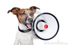 Dog Megaphone - Download From Over 33 Million High Quality Stock Photos, Images, Vectors. Sign up for FREE today. Image: 25365686