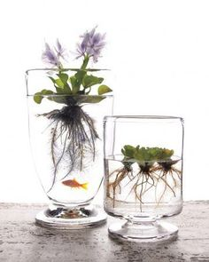 Create an elegant DIY water garden to brighten your home no matter the season. Click here for tips and suggestions on setting it up: shout.lt/fPfN
