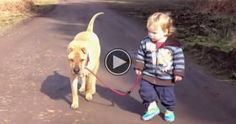 A Toddler Is Walking His Dog. What Happens Next? I Can't Stop Smiling.