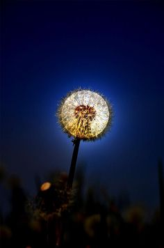 the moon is actually behind the dandelion which gives it that irredescent light which contrasts well with the deep blue sky. This is awesome! Cool Pictures, Cool Photos, Beautiful Pictures, Amazing Photography, Art Photography, Shoot The Moon, Beautiful Moon, Son Luna, To Infinity And Beyond