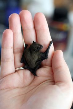 bats are my favorite animal. they're misunderstood, which is why i love them. this one is the tiny bumblebee bat. i wish i could have one as a pet.
