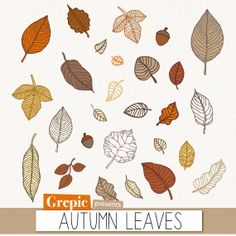 Autumn clipart: Autumn leaves digital clipart pack with colorful leaves and acorns for fall inspired scrapbooking, card making, invites