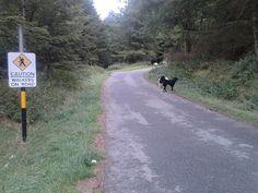Ticknock forest dog walk near Dublin Dog Paws, Dog Walking, Dublin, Walks, Country Roads, Wood, Woodwind Instrument, Timber Wood, Trees