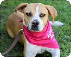 Looking for a great, easy, well-mannered, potty trained dog who is good with cats? Adopt DERBY! http://www.adoptapet.com/pet5450265.html