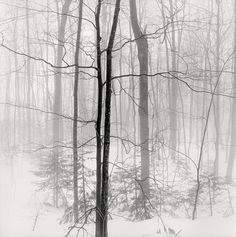 snowy forest | winter . Winter . hiver | @ wolf eyebrows |
