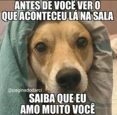 ❤️ #cachorro #petmeupet