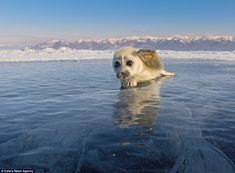 The adorable seal cub was more than happy to pose for a picture - so much so he even waved at the photographer