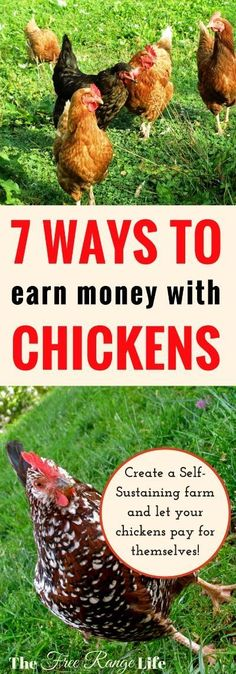 Chickens are a hard-working homestead staple. Learn 7 ways to make money raising chickens and increase your homestead income and have a profitable flock.