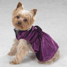 teacup yorkie clothes yorkie clothes on pinterest dog dresses small dog 4492