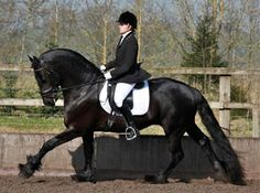 Friesian dressage