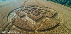 Crop Circle aparece en Sparticles Wood, Nr Chaldon, Surrey, Reino Unido fue reportado el 3 de agosto 2016